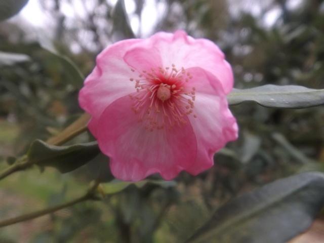 Floraisons de décembre  - Page 7 00112