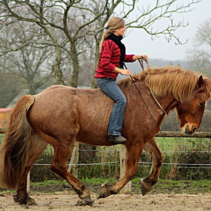[ Harmony Équilibre Équestre - Enseignante d'équitation académique , travail en liberté ] 11017510