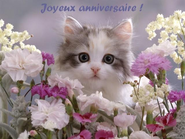 bon anniversaire violette Chattt10