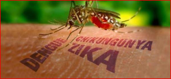 Zika - Page 2 Zzika10