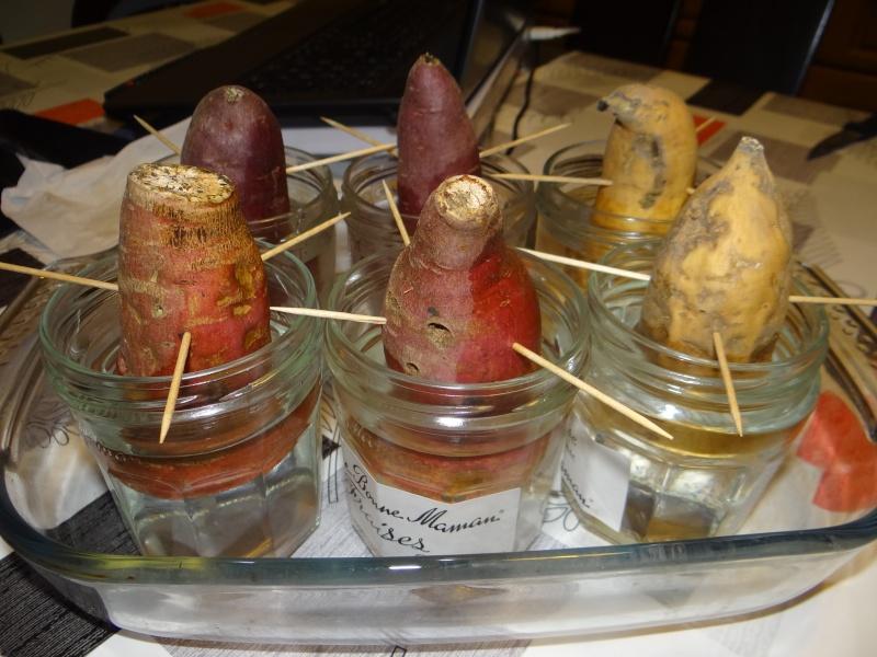 patates douces Dsc03032