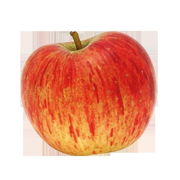 un fruitier Reine-10