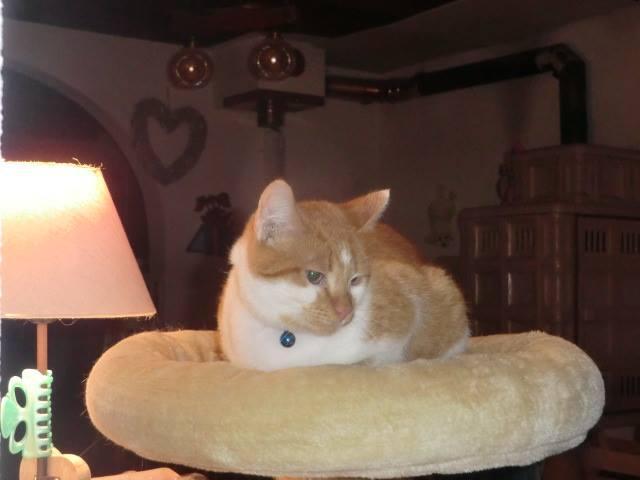 CHAUSSETTE (ex. NUFAR), chaton de 7 mois tapé par une voiture trouvé dans la rue (Pascani) - adopté par Déborah (39) - décédé 12355110