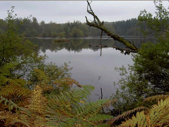 Les Vosges Saônoises - Le Plateau des 1 000 étangs Etang_10