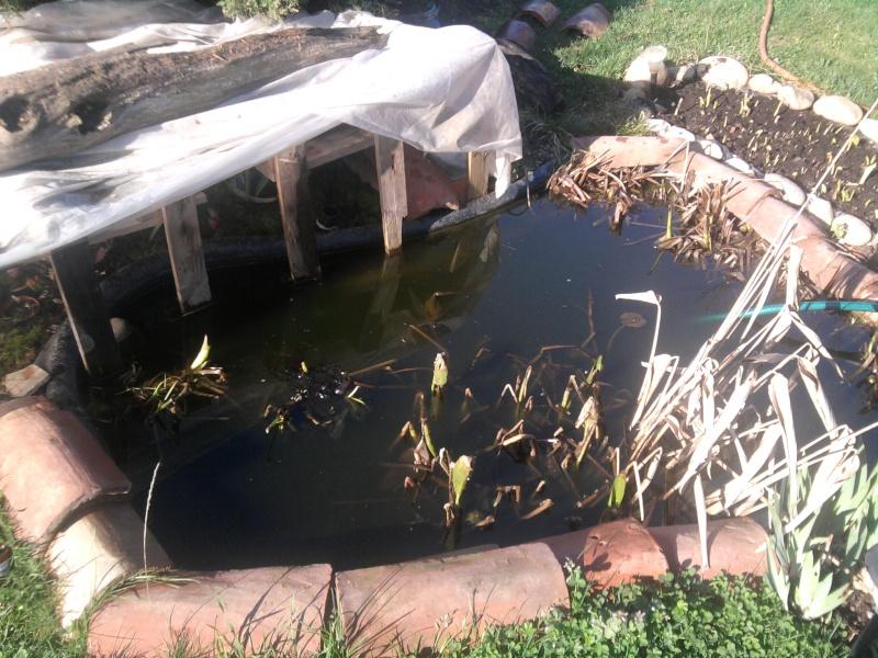 Petit bassin chez Cédric Photo010