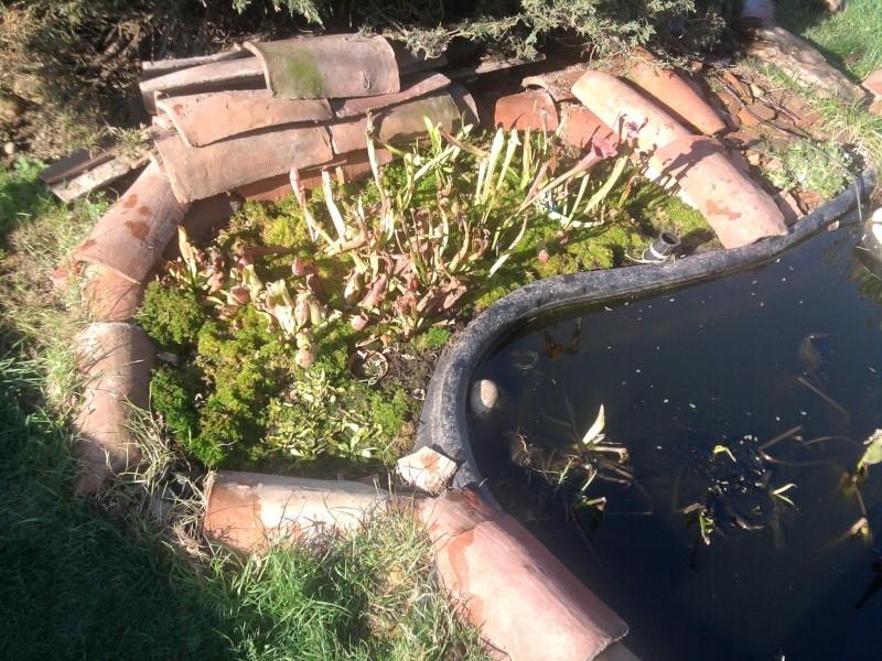 Petit bassin chez Cédric Photo011