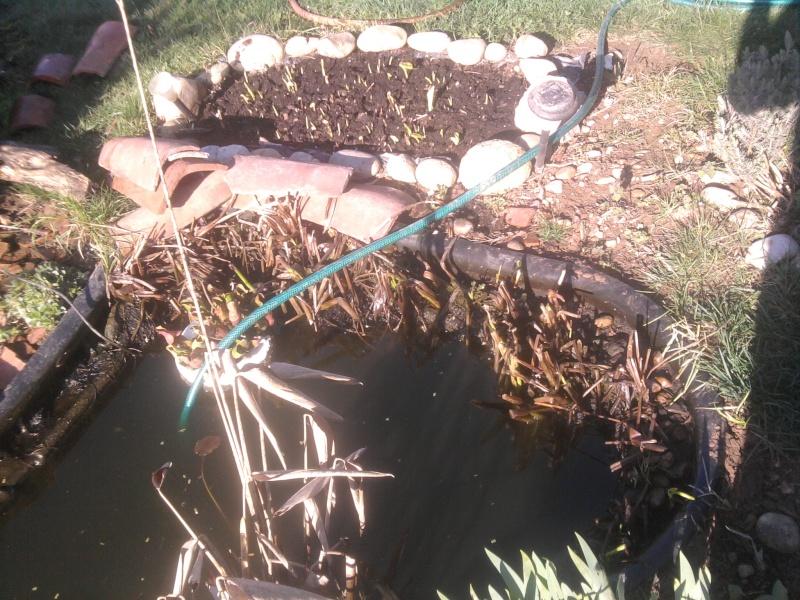 Petit bassin chez Cédric Photo012