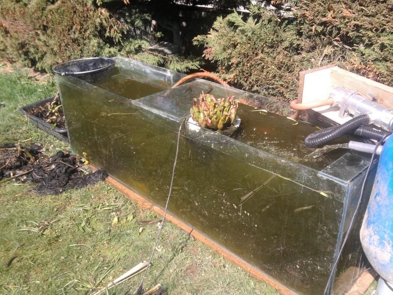 Petit bassin chez Cédric Photo014