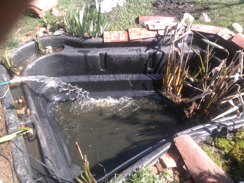 Petit bassin chez Cédric Photo016