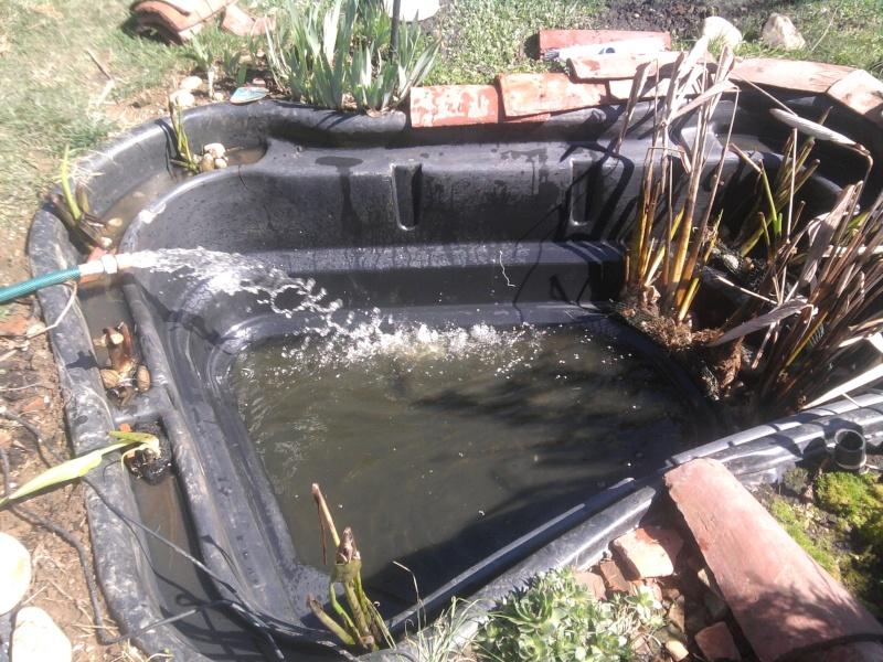Petit bassin chez Cédric Photo017