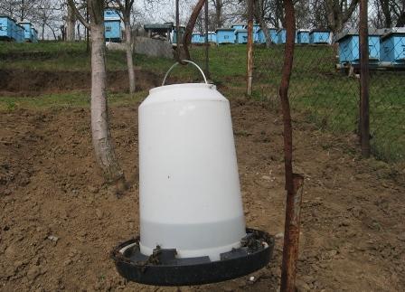 UJORJA - Nevoja e bletëve për ujë! Ujore11