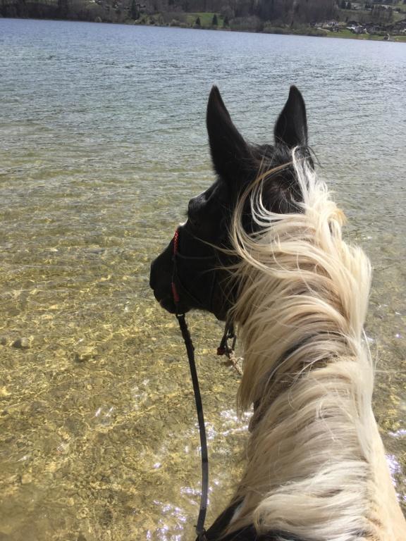 L'équitation sans mors - Page 8 4a181310