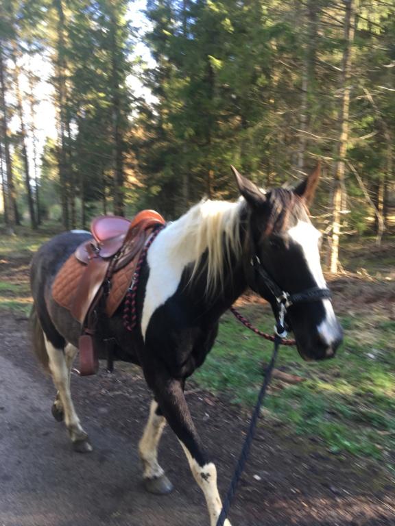 L'équitation sans mors - Page 8 67417b10