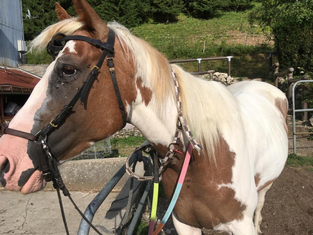 L'équitation sans mors - Page 5 95029110