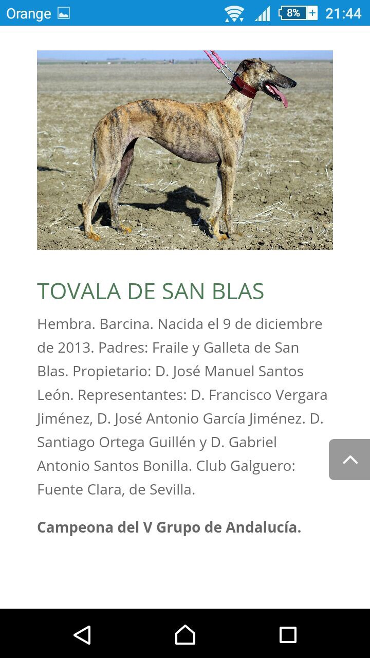 which aspects of their morphology useful for function is still respected in dog show? 12440310