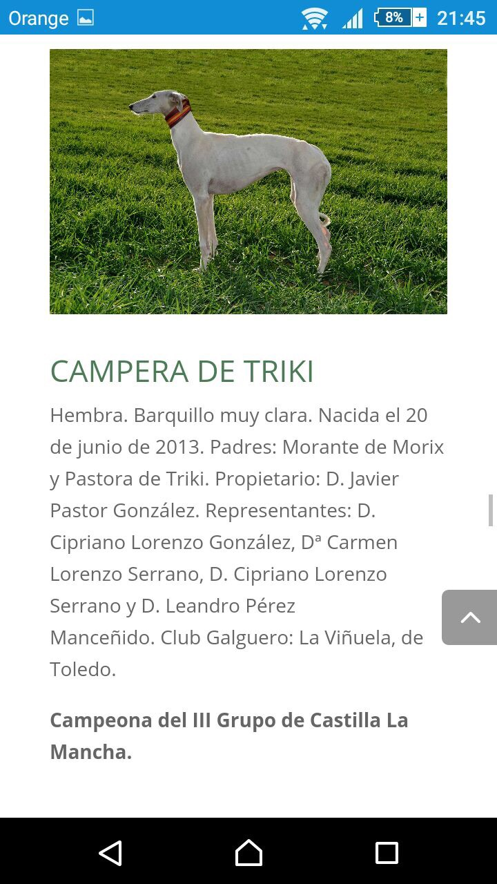 which aspects of their morphology useful for function is still respected in dog show? 12471410