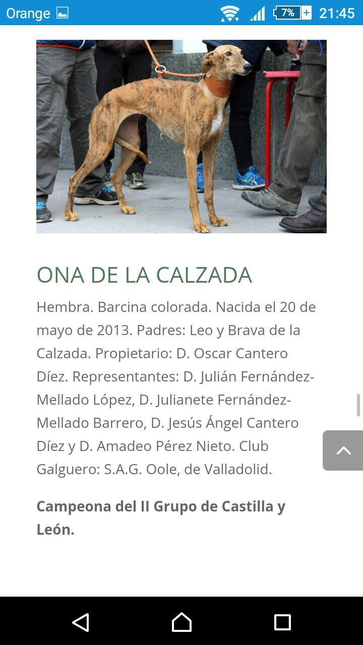 which aspects of their morphology useful for function is still respected in dog show? 12473810