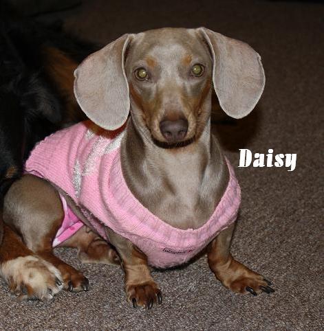 Isabella's Daisy_10