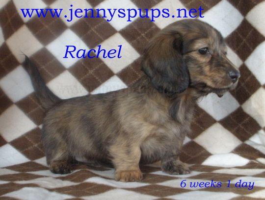 Brindles Rachel11