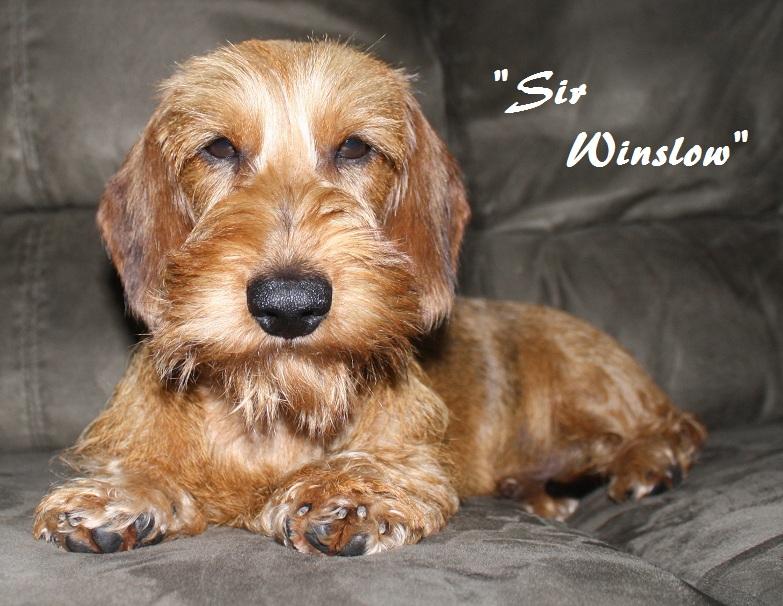 Sir Winslow~Red Wire Sir20w10
