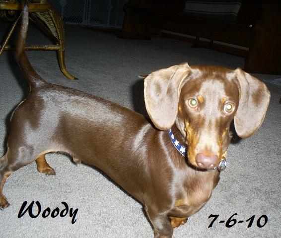 Chocolates! Woodys10
