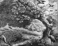Fables d'Esope - Page 2 Du-che10