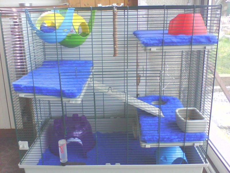 Photos de vos cages Img01710
