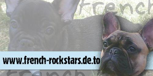 französische bulldogge mops forum - Das kleine Bullyforum - Portal Banner12