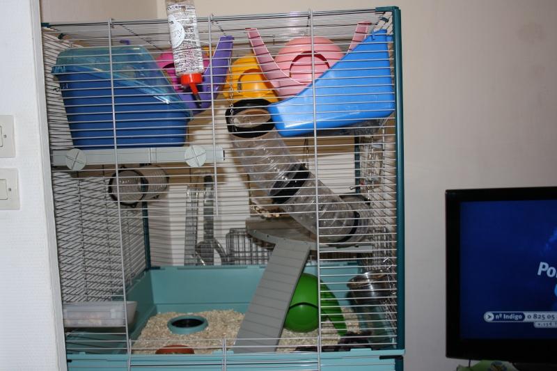 Photos de vos cages Img_2610