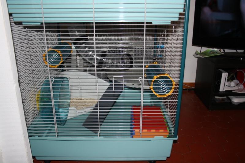 Photos de vos cages Img_2611