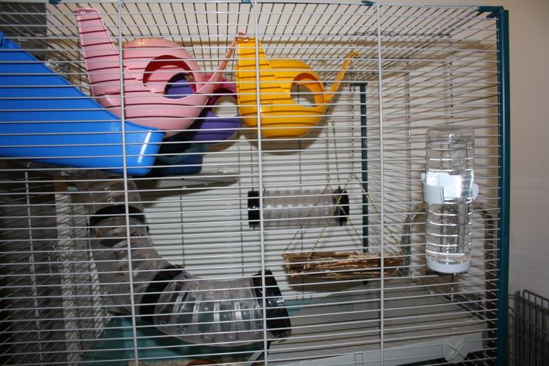 Photos de vos cages Img_2613