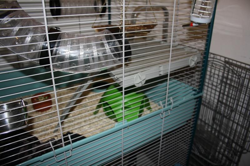 Photos de vos cages Img_2614