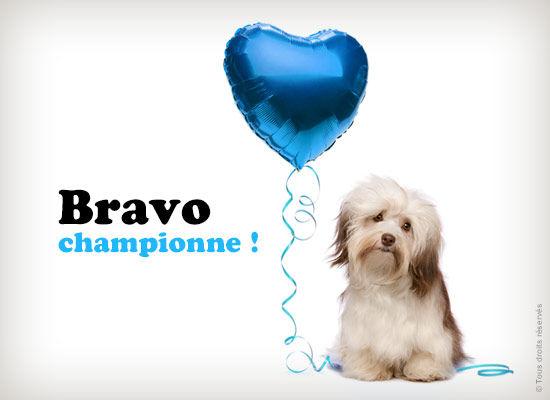"""QUIZ n°2 du Mardi 19/01  : """"Mâle ou Femelle"""" Bravo-10"""