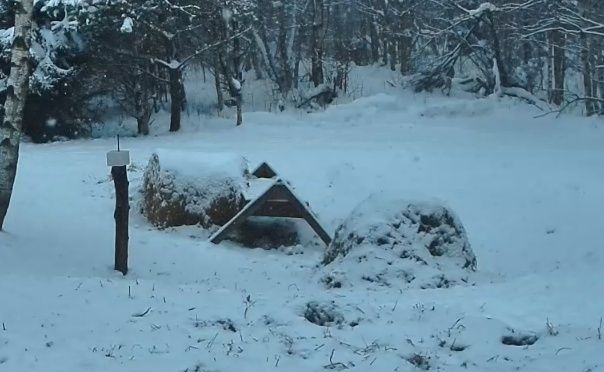new webcam - Page 6 Foret11
