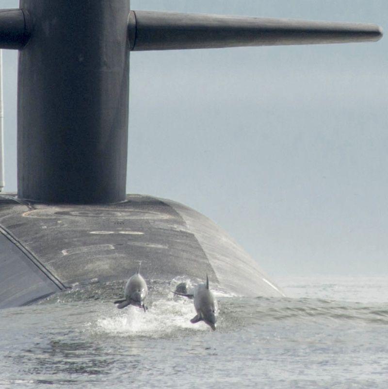photos de divers sous marin - Page 2 6011