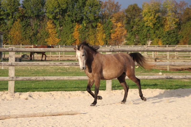 Estimation de nos chevaux ! 12188010