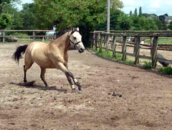 Saison préféré a cheval P1010710