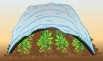 Агроволокно (спанбонд) - продажа и поставка Ddnddd20