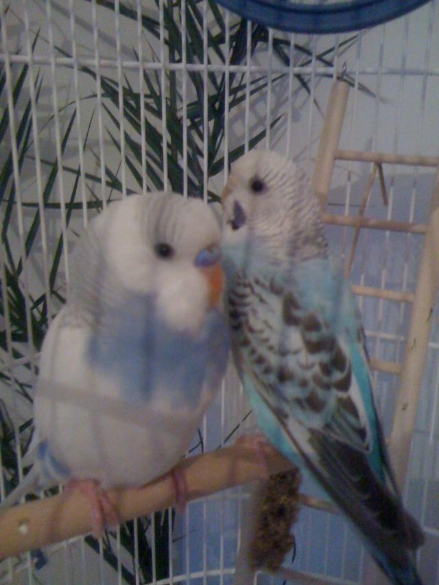 pilou et saya Pilou_17