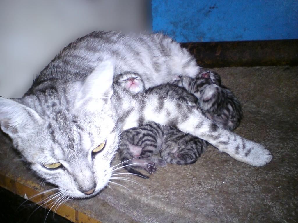 Fotografije naših kućnih ljubimaca Dsc01410