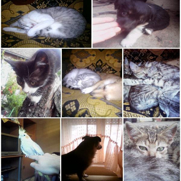 Fotografije naših kućnih ljubimaca Ljubim10