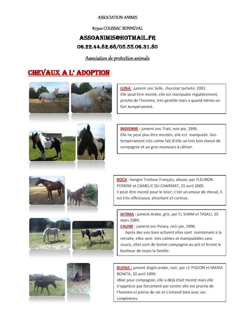 (87) plusieurs chevaux à adopter Descri10