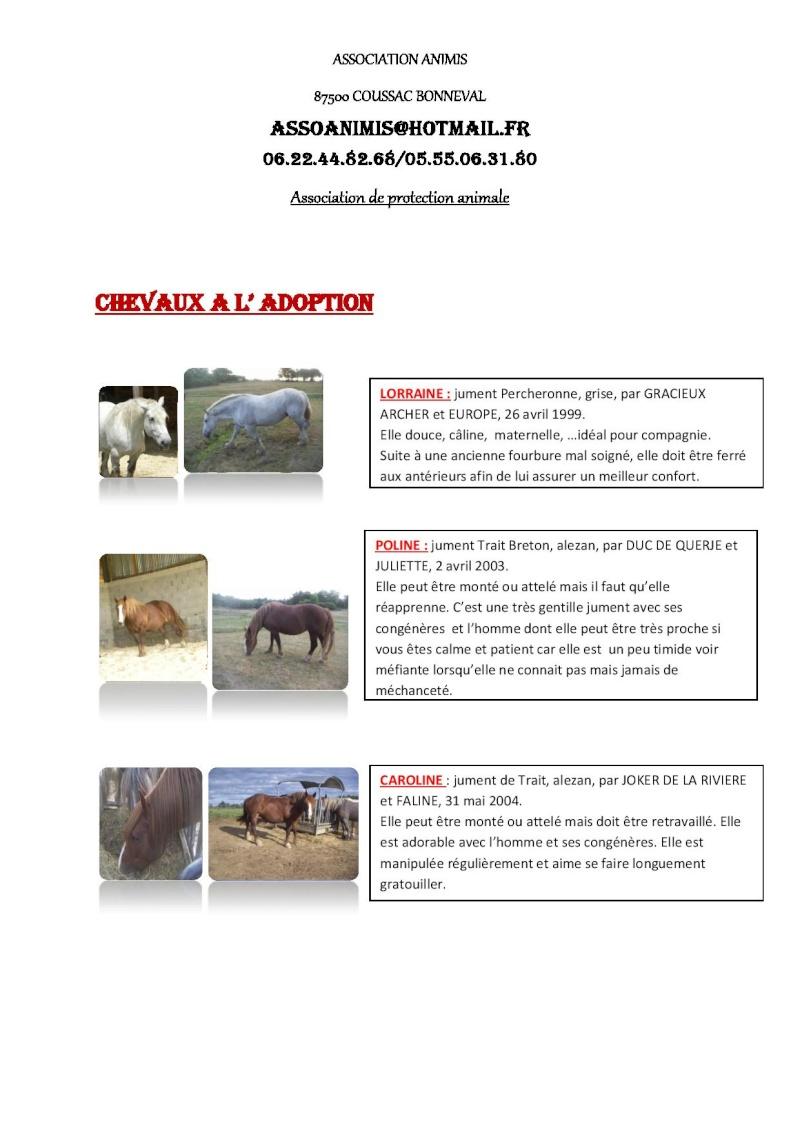 (87) plusieurs chevaux à adopter Descri11