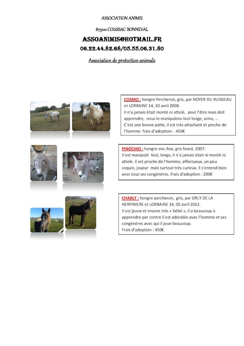 (87) plusieurs chevaux à adopter Descri13