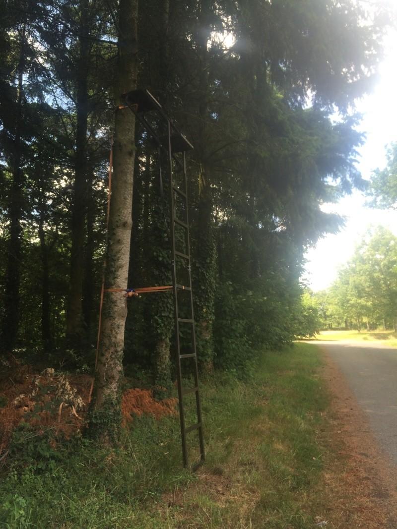 échelle d'affut ou treestand ?  Echell10
