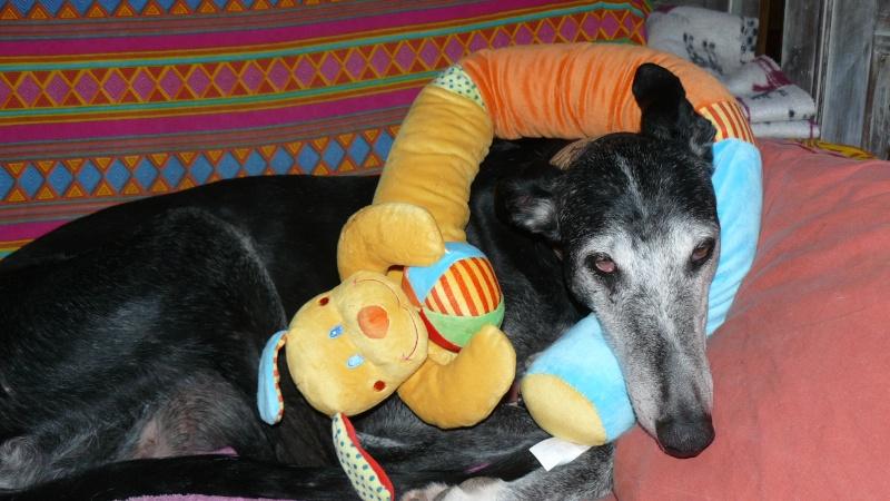 Florence Squelette de Merida à l'adoption  Scooby France    Adoptée  - Page 11 02710