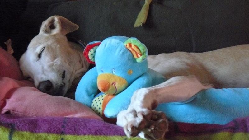Florence Squelette de Merida à l'adoption  Scooby France    Adoptée  - Page 11 04110