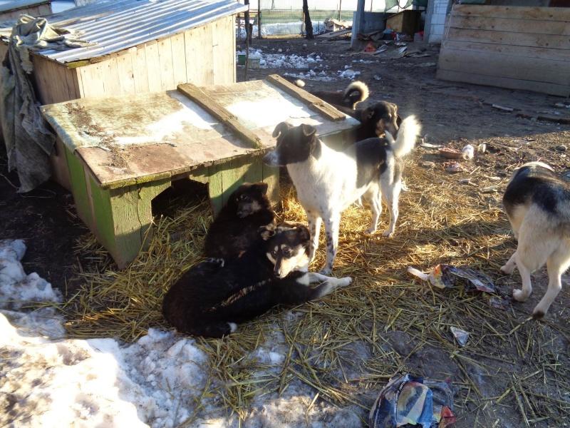 GAYA- femelle noire et blanche née en 2013- parrainée par Skara - SC-SOS-R- - Page 2 12628411
