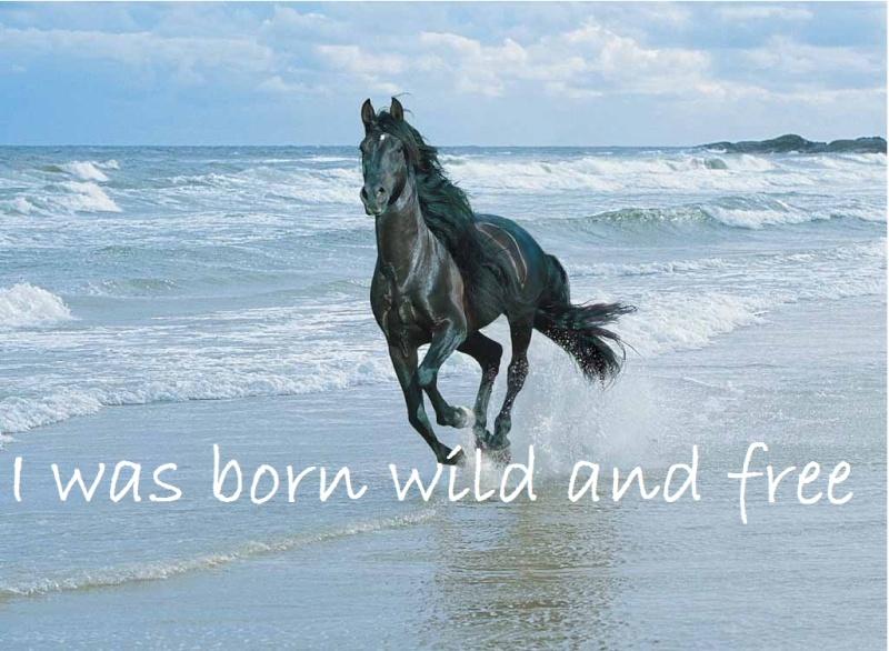 ɴever ѕαy ɴever α ѕнop вy leххιe♥ Horse10