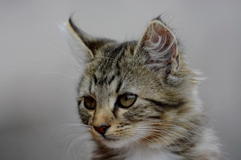 Les chats. 2014-012